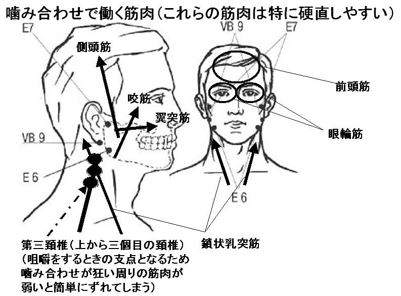 噛み合わせと顔面筋(側頭筋、咬筋、翼突筋)