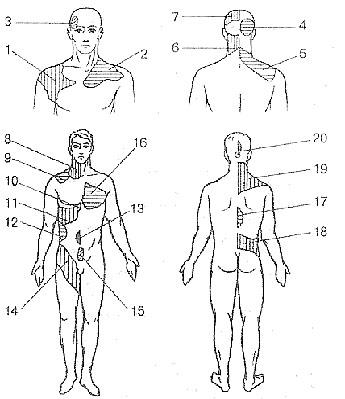 内臓疾患とリフレクソロジーゾーン(ヘッド帯)