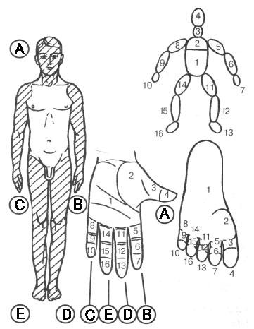 手足と体の対応リフレクソロジーポイント