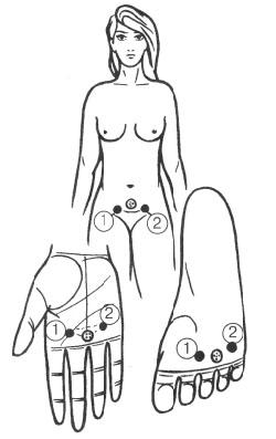 子宮、卵巣、膀胱のリフレクソロジーポイント