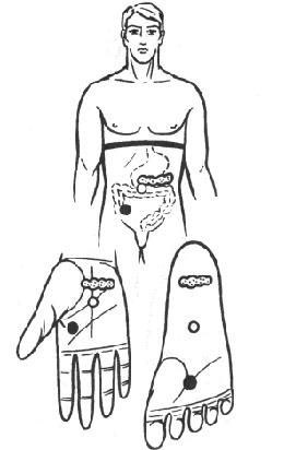 胃、腸、肝臓、胆のうのリフレクソロジーポイント
